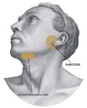 Hpv warts diagnosis, Human papillomavirus (hpv) and genital warts. Squamous papilloma cheek